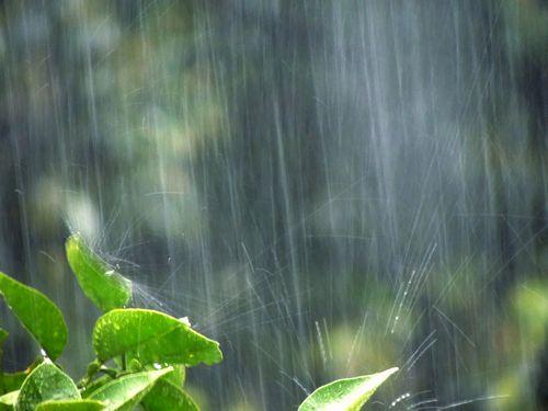 梅雨の雨降り